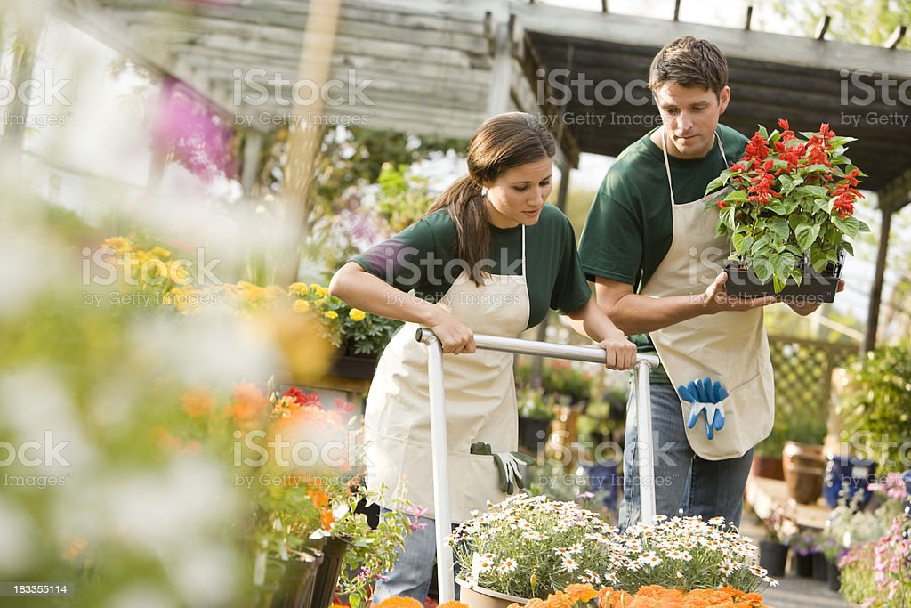 Workers in retail plant nursery with flowers stock photo