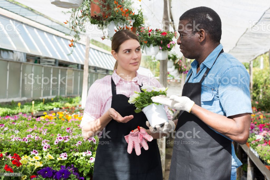 Workers inspecting bloomy plants - Royalty-free Activity Stock Photo