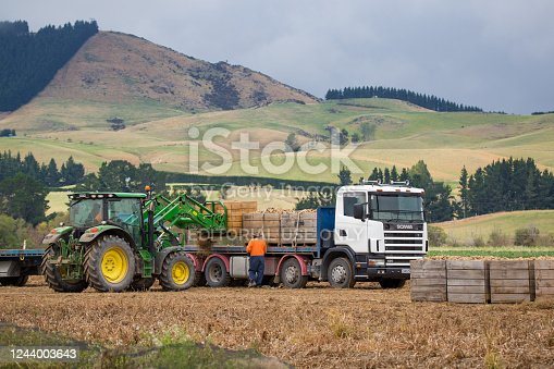 Sheffield, Canterbury, New Zealand, March 24 2020: A farm worker in a green tractor loads up a truck with bins of potatoes in a field