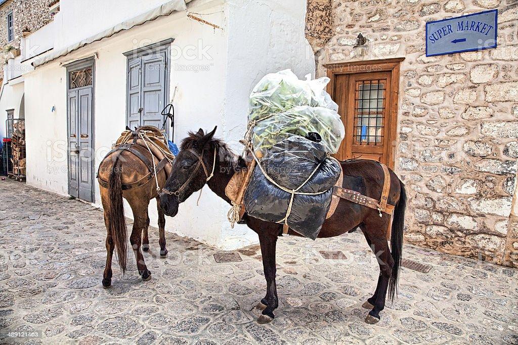Working animals stock photo