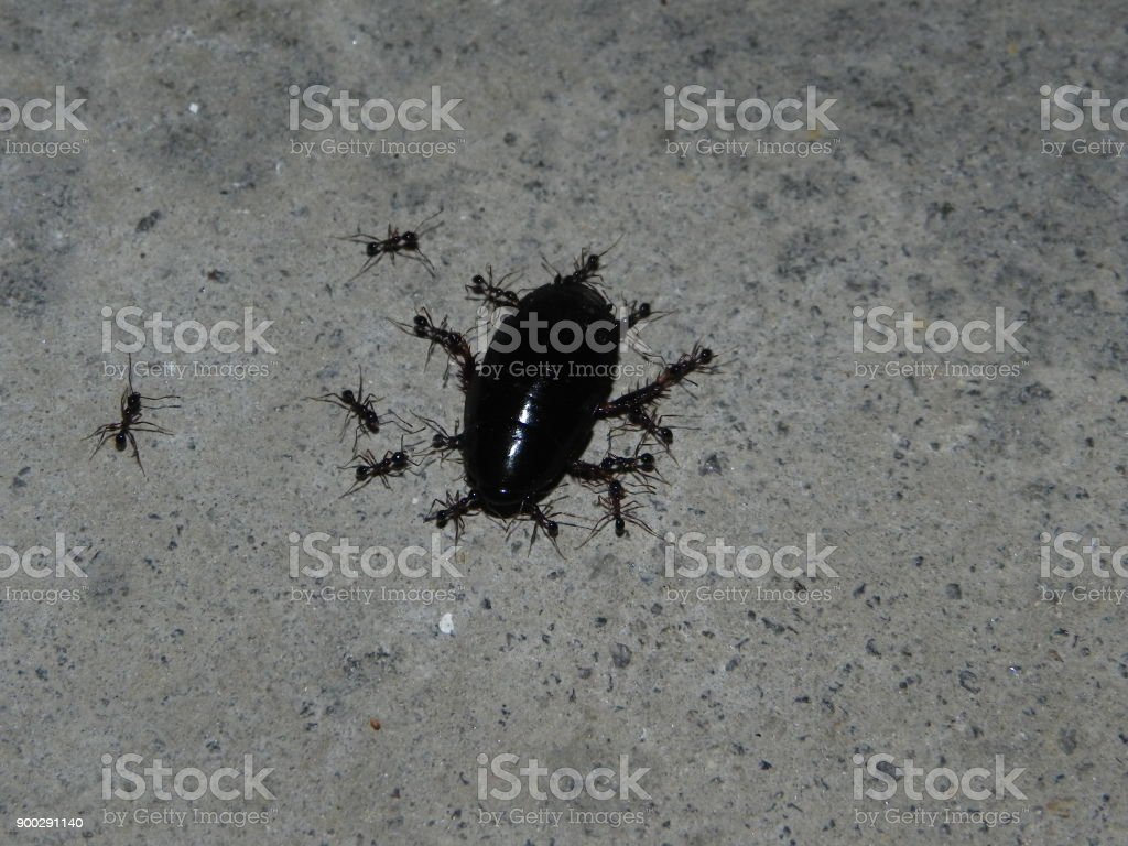 working ants stock photo