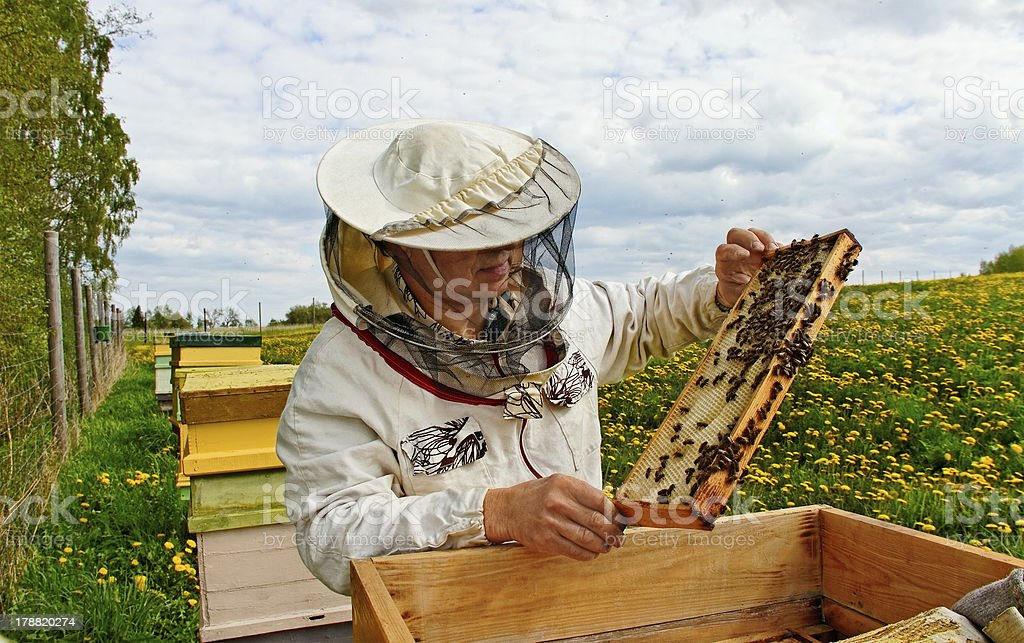 Working apiarist. royalty-free stock photo