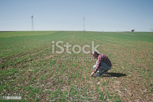 Adult man farmer inspecting plants at his wheat farm field on sunny day in early springtime. Photo is taken with full frame dslr camera outdoors.