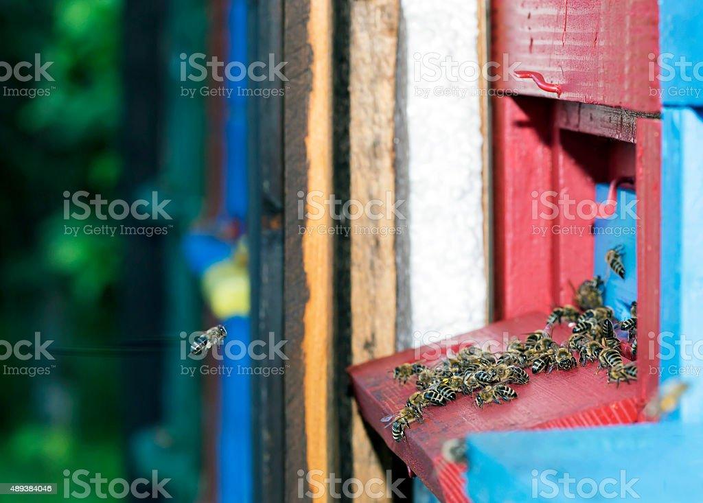Working bee stock photo