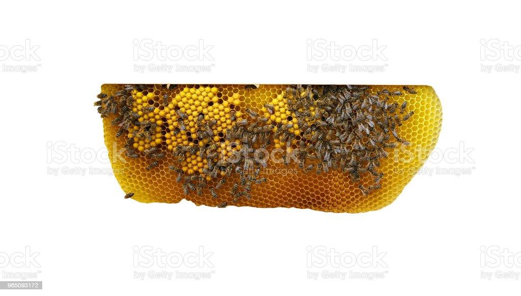 Working bees on honeycomb zbiór zdjęć royalty-free