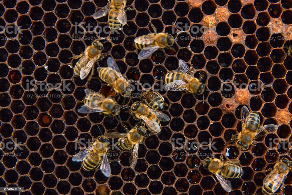 Working bees on the honeycomb with sweet honey. stock photo