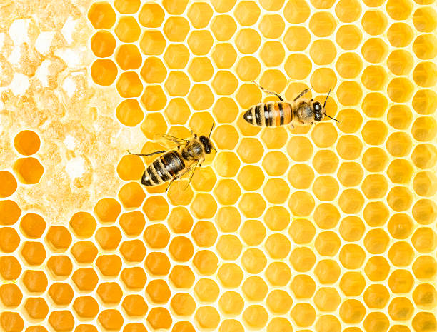 Working bees stock photo