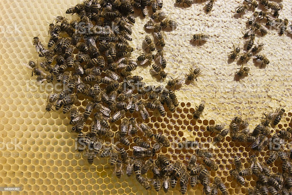 Working Bees royalty-free stock photo