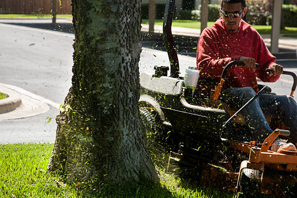 Best Mexican Mowing Lawn Stock Photos Pictures Amp Royalty