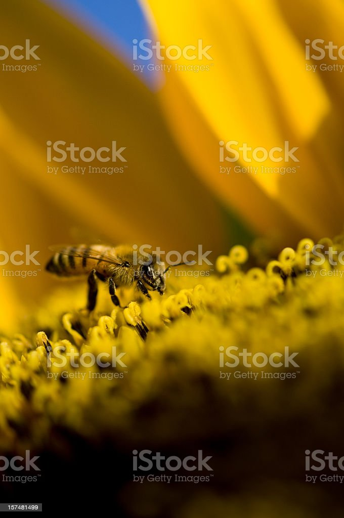 Working day (pollination) stock photo