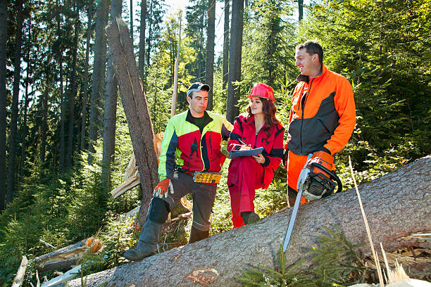 Working discussions between technical engineer and lumberjacks in forest stock photo