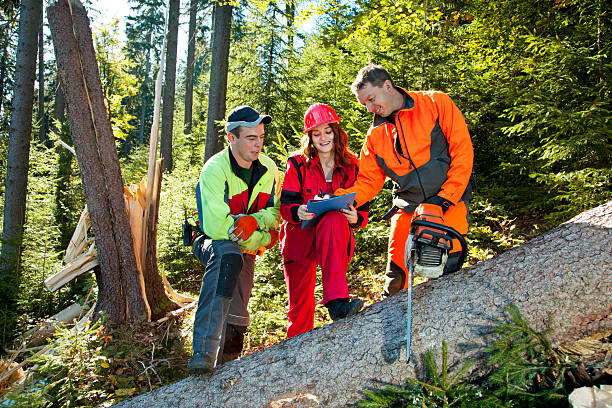 Working discussions between technical engineer and lumberjacks in forest Two lumberjack with chainsaw and young woman in work clothes discuss about forest calamity. She has wearing red work clothes and a helmetand holdes notepad. Lumberjack has protective clothes. Shallow DOF. Shooting with the Canon EOS 5D Mark II. forester stock pictures, royalty-free photos & images