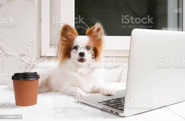 Working dog cute dog is working on a silver laptop with a cup of dog picture id1128863126?b=1&k=6&m=1128863126&s=612x612&h=lee2fhmyqvjop 0gxp mbm167ms5wlbbmitksaszimg=