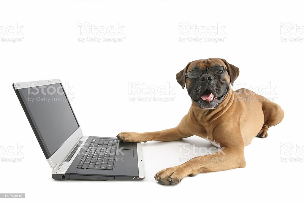 Working dog royalty-free stock photo