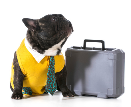 Working Dog Stock Photo - Download Image Now
