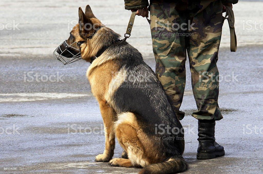 working dog royalty-free stock photo