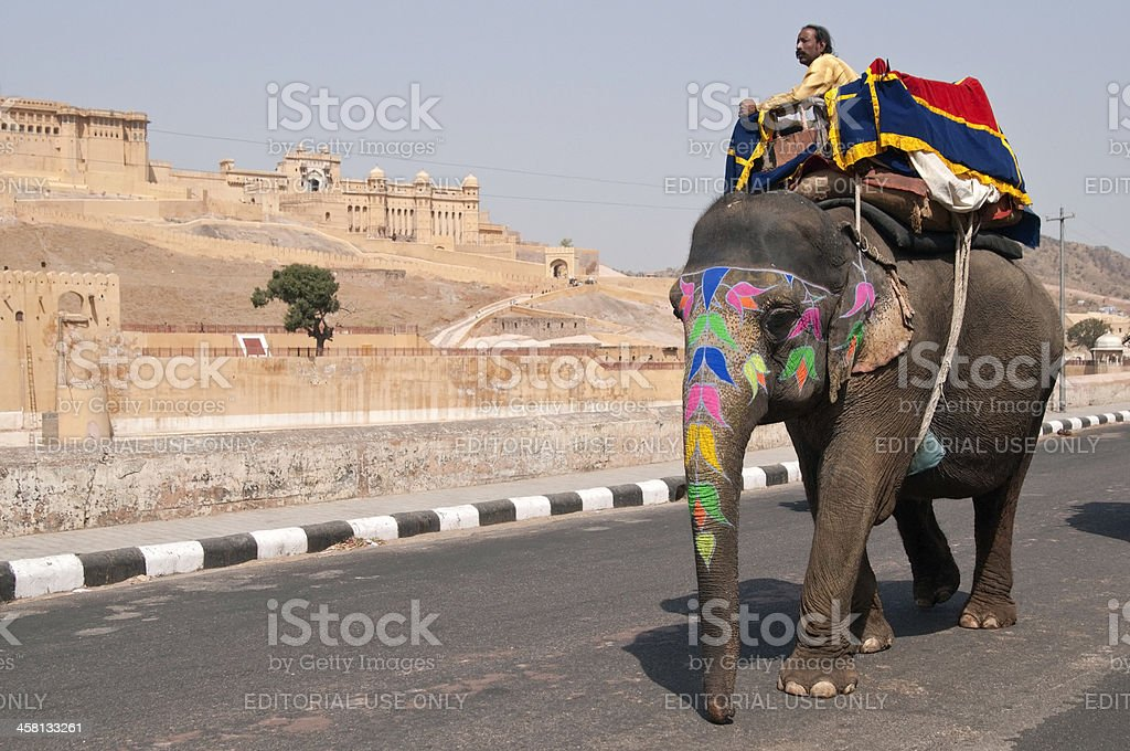 Working Elephant royalty-free stock photo