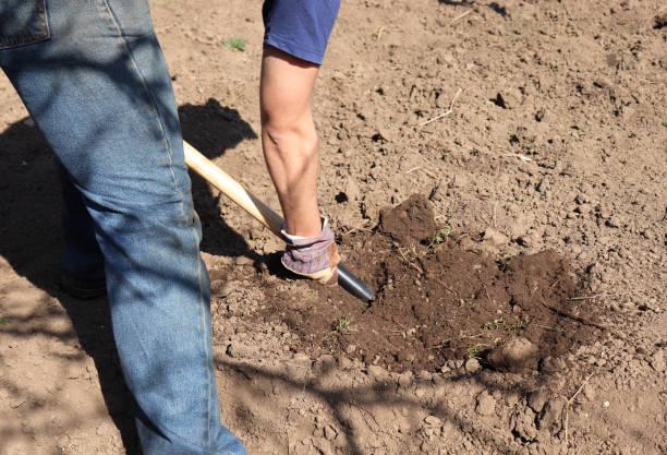 arbeitende bauern im garten. organischer dünger für die bodenbewirtschaftung, vorbereitung des feldes für die pflanzung im frühjahr, biobauern oder herbstgärtnerkonzept. - gummimulch stock-fotos und bilder