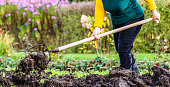 istock Working farmer in the garden. Organic fertilizer for manuring soil, preparing field for planting in spring, bio farming or autumn gardening concept 892323438
