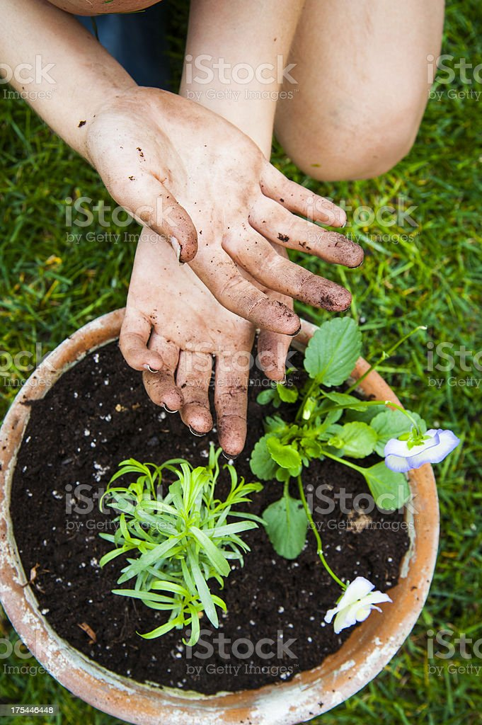 Working hands over freshly planted flowers and tarragon. royalty-free stock photo
