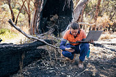 Rockingham Lake regional park.Female scientific environmental conservationist working with the aid of technology to collect data. The Australian Bush has been damaged by fire.
