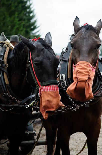 Die Pferde Essen – Foto