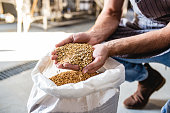 istock Working in craft brewery 1203834928