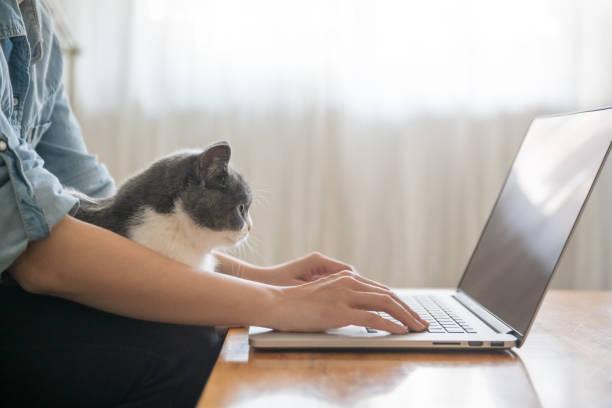 Arbeiten vor dem Computer, ist das Kätzchen auf dem Schoß liegen. – Foto