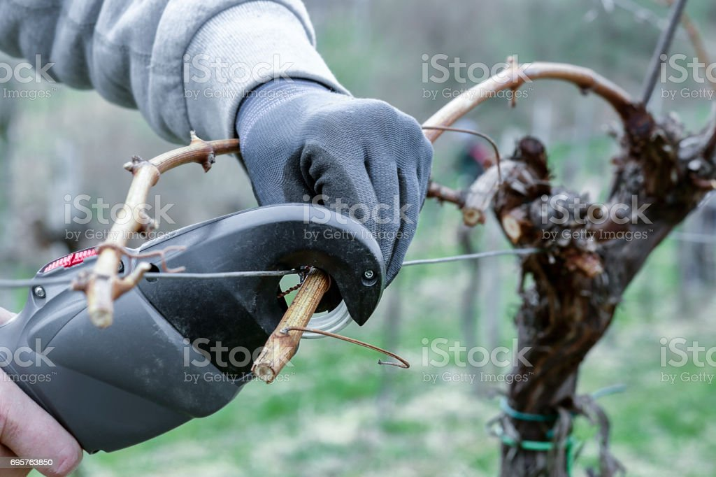 Arbeiten in den Weingarten – Foto