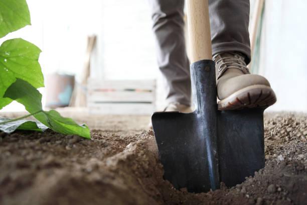 在菜園工作, 腳鐵鍬的土壤, 關閉 - 鏟 個照片及圖片檔