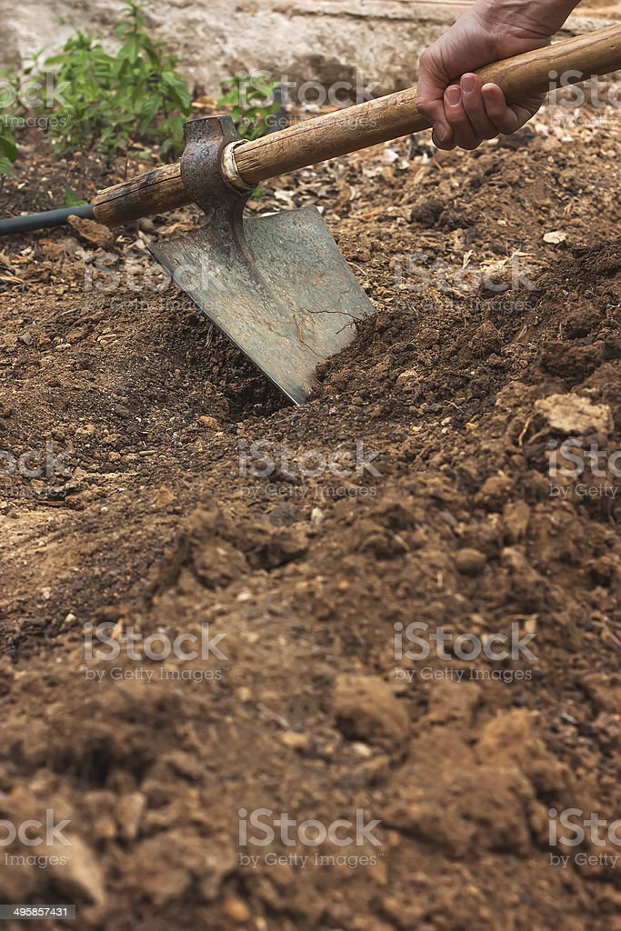 Working in vegetable garden with hoe royalty-free stock photo