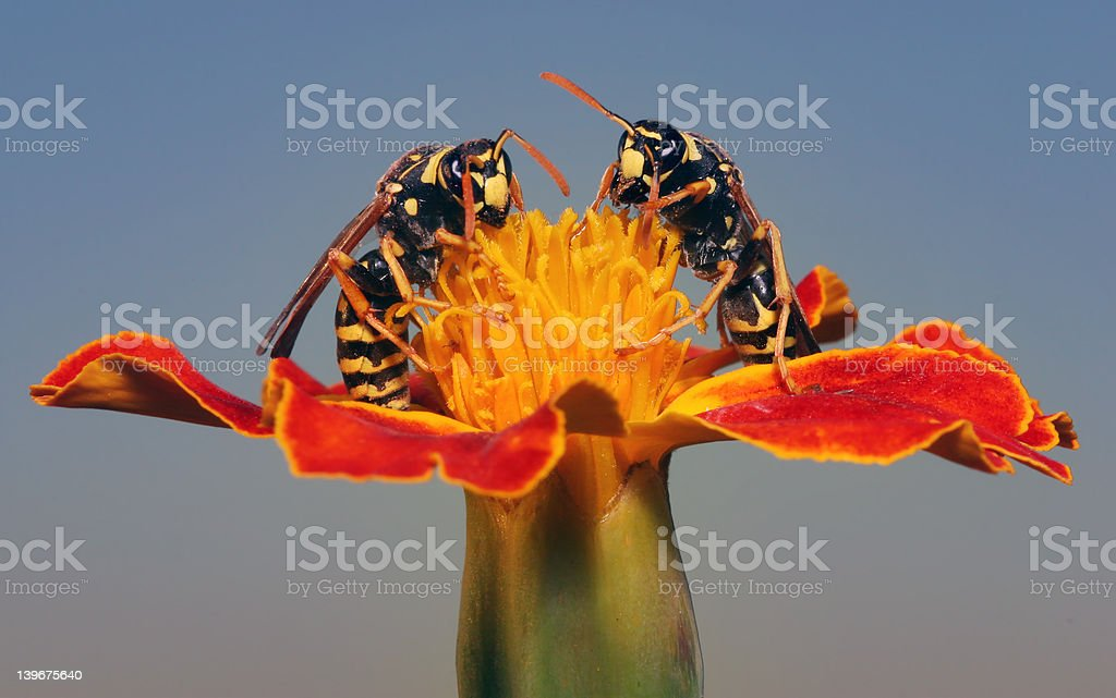 Working it royalty-free stock photo