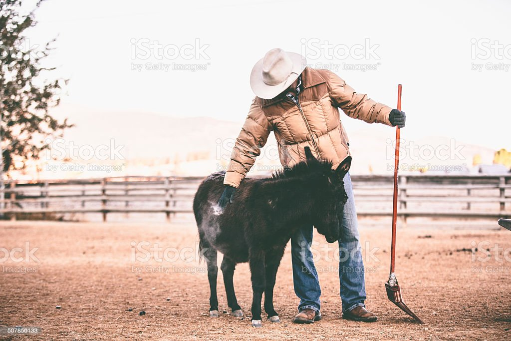 Working man holds shovel and stops to pet small horse royalty-free stock photo