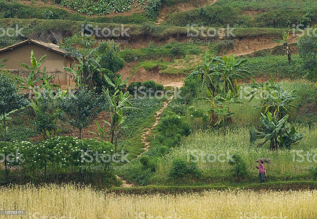 Working on Afican fields - farmland in Central Africa royalty-free stock photo