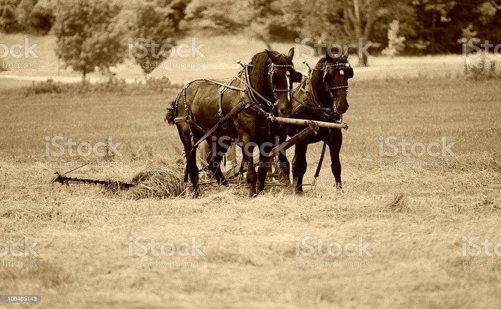 Working on the Farm - Sepia stock photo