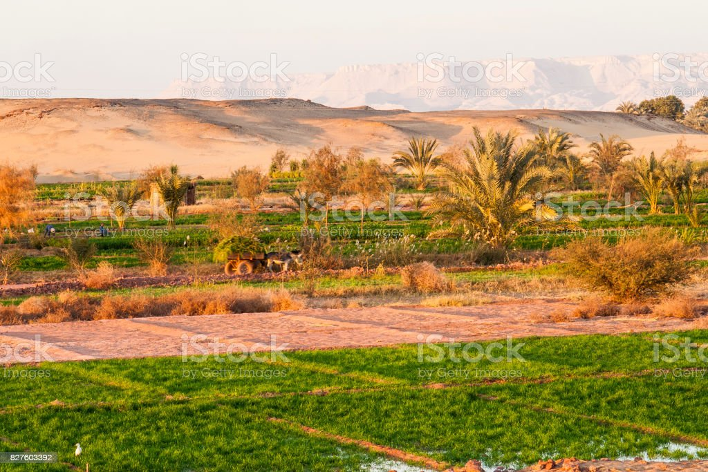 Working on the fields at Dahla oasis, Egypt. stock photo