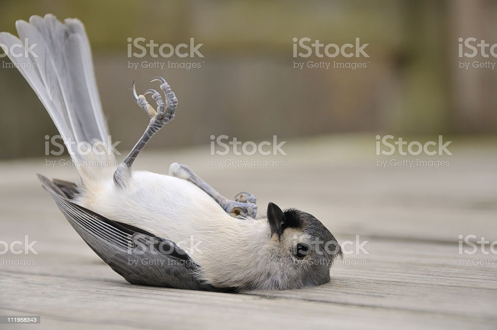 Working Out Birdy stock photo