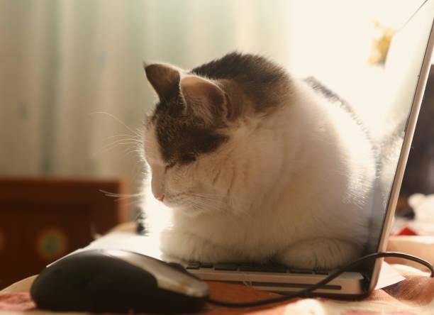 Working place with laptop mouse and lazy funny cat laying on warm picture id954528998?b=1&k=6&m=954528998&s=612x612&w=0&h=ry06gu5vbz9e2jtamdcro6pndyukitepc7bmgsxxc20=