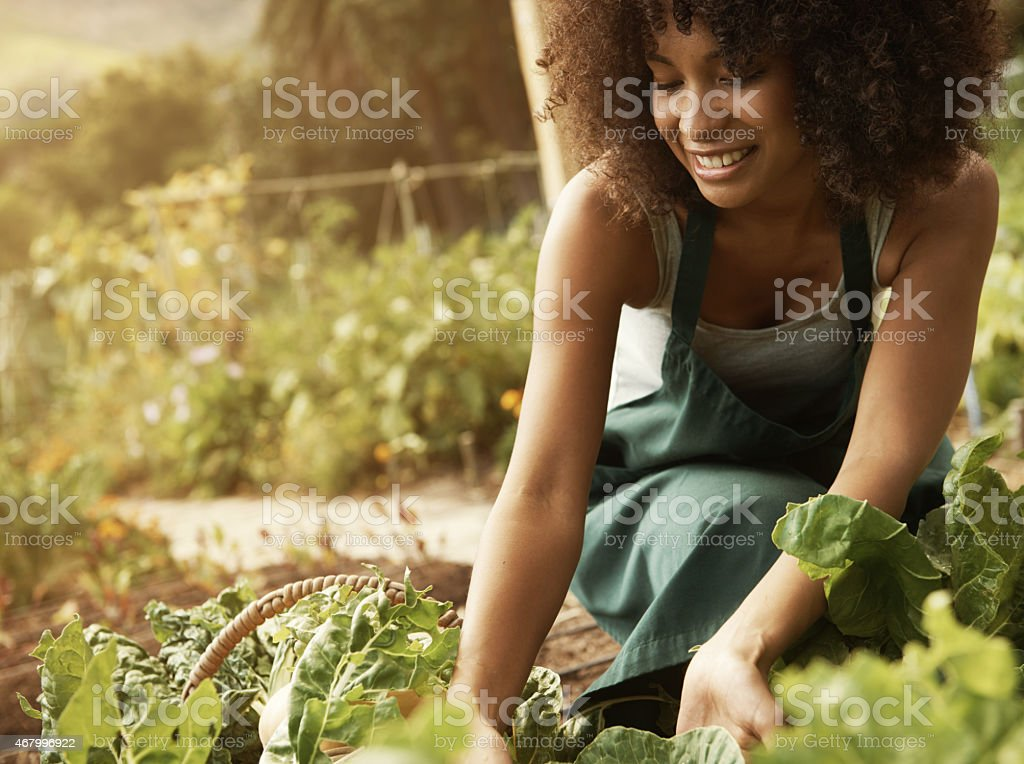 Faire travailler la terre avec amour - Photo