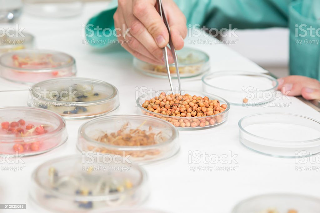 Working with biological material in the laboratory. stock photo