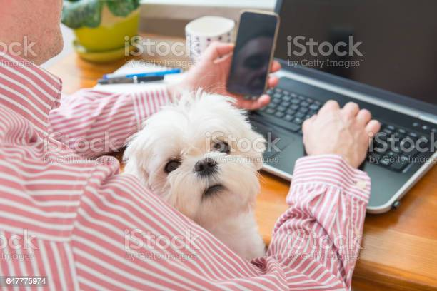 Working with dog at home picture id647775974?b=1&k=6&m=647775974&s=612x612&h=sq 6g7lgo0m1dq5xkob5uevfzc bq1igbcmhmppao7i=