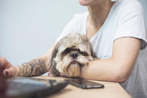 Working with dog at home picture id700077600?b=1&k=6&m=700077600&s=612x612&w=0&h=kbwhksizynjpgfizojetgx1wqb s96tzhfj4bivhqhs=