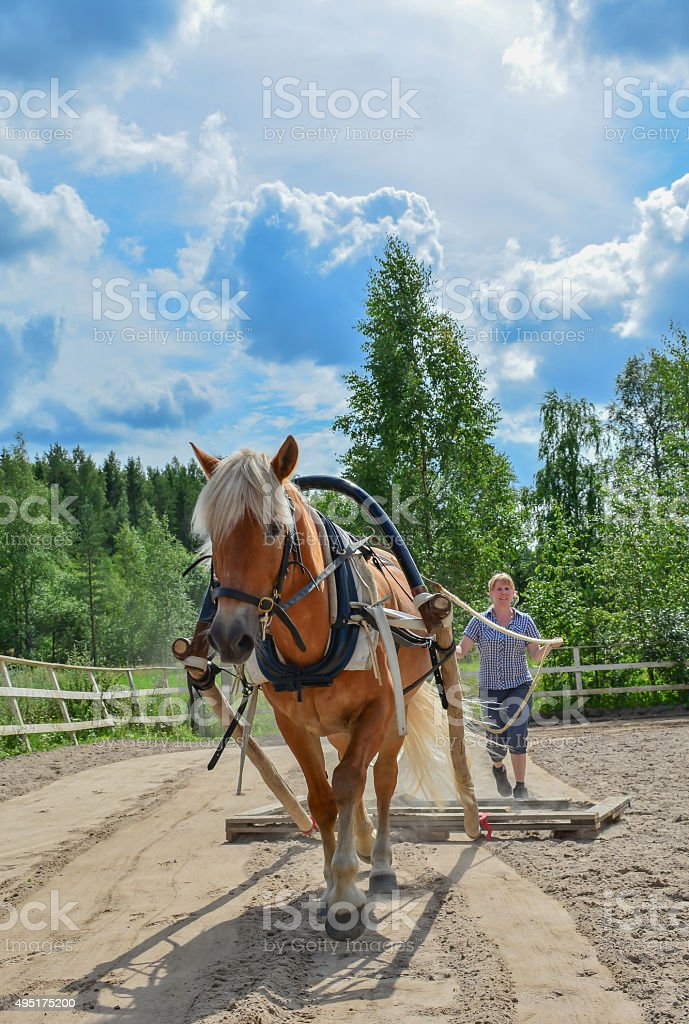 Working with horse stock photo