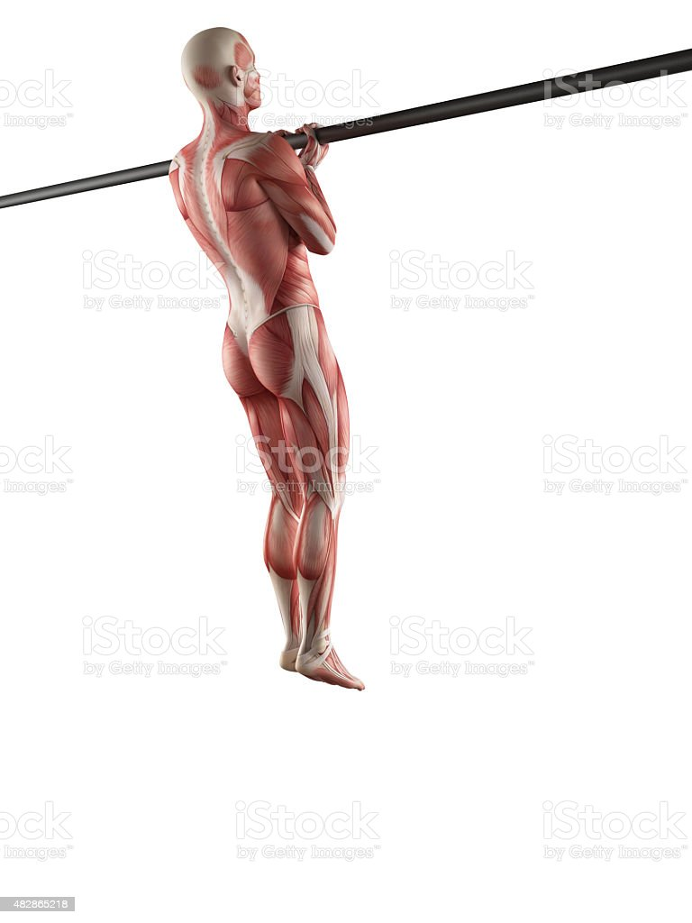 Workout Close Grip Chin Up Stock Photo & More Pictures of 2015 | iStock