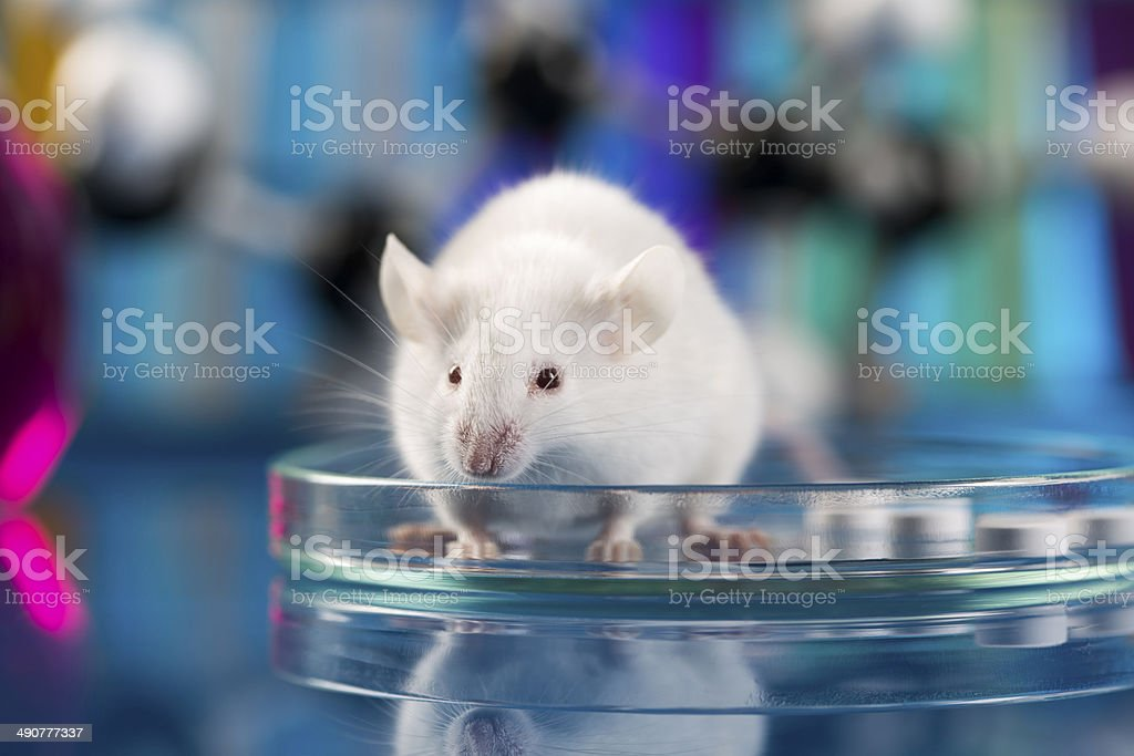 Workplace modern laboratory for molecular biology test on blue background stock photo