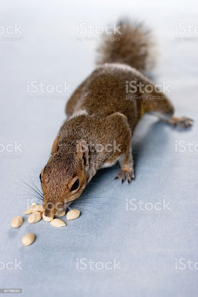 Works for Peanuts stock photo