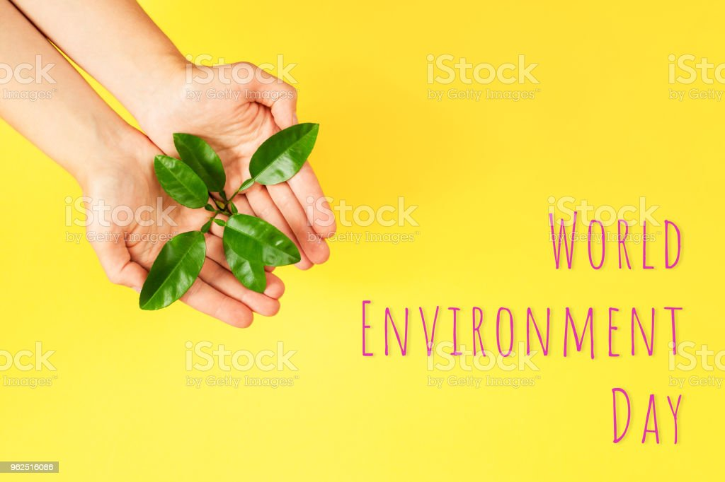World Environment Day card. - Royalty-free Arranging Stock Photo