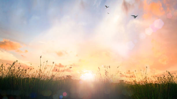 World environment day concept Calm of country meadow sunrise landscape background sunrise stock pictures, royalty-free photos & images