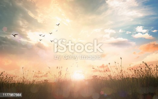 Birds flying and meadow sunrise landscape background