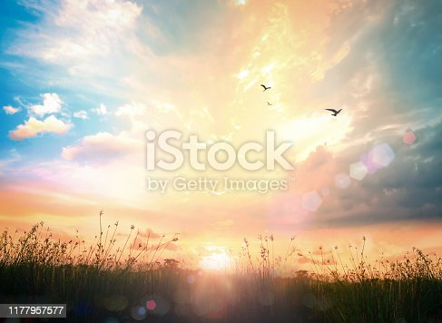 Calm of country meadow sunrise landscape background